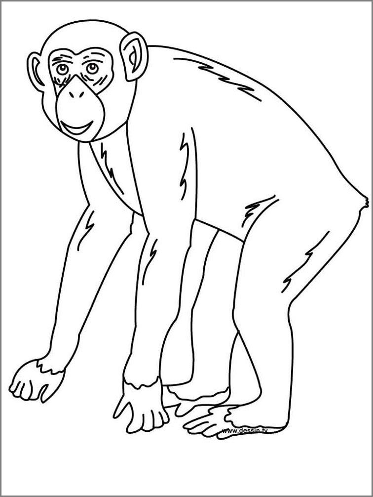 обезьяна рисунок