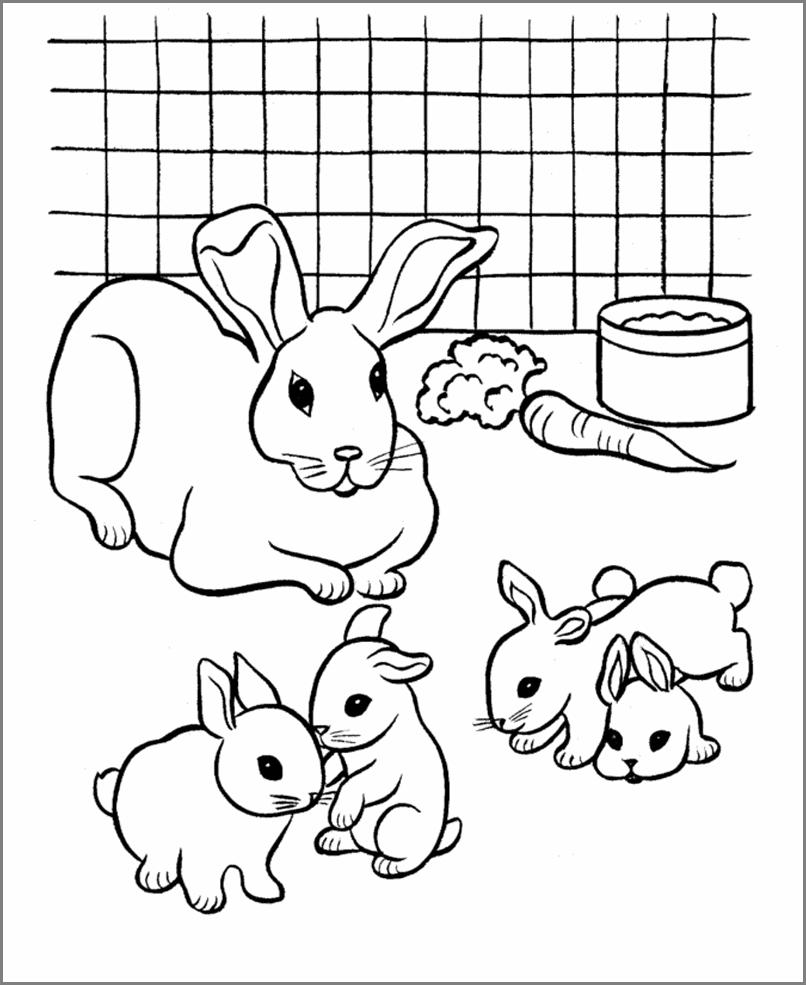 кролики для срисовки