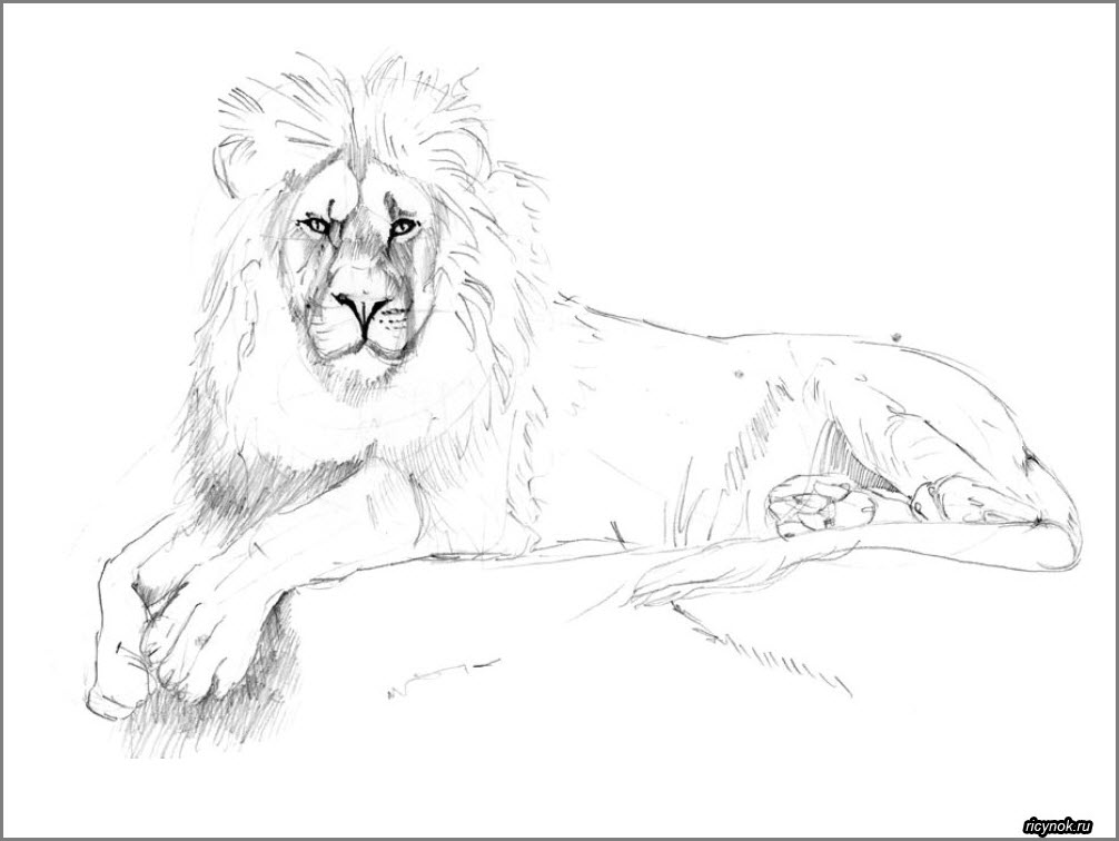 лев срисовка