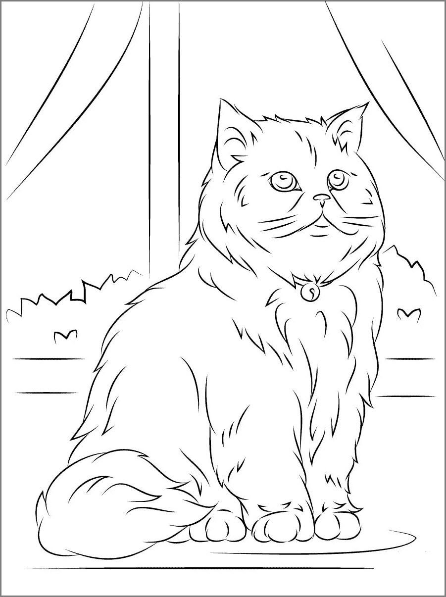 персидский кот рисунок