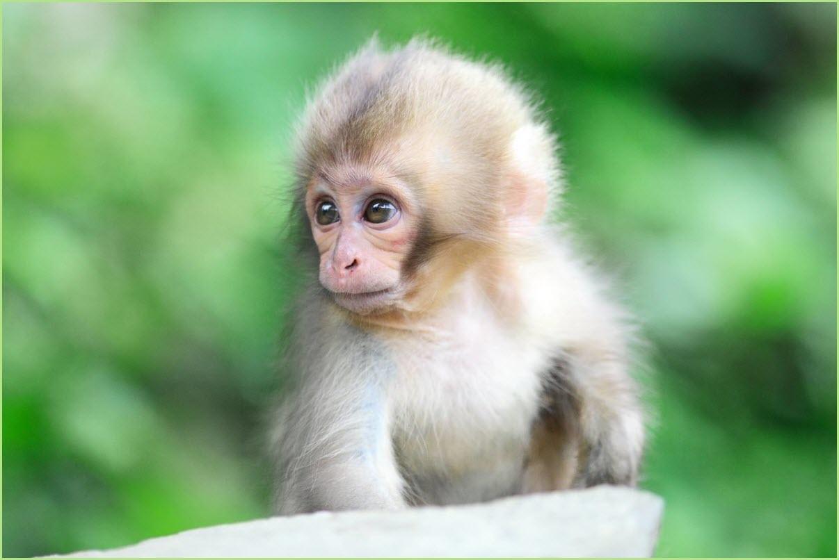 смешная обезьянка 2