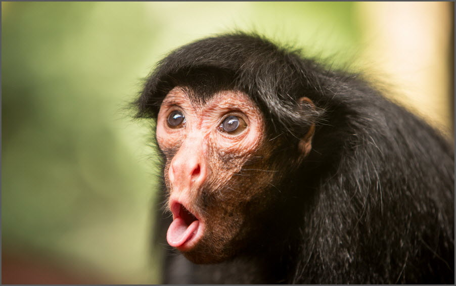 удивлённая обезьяна
