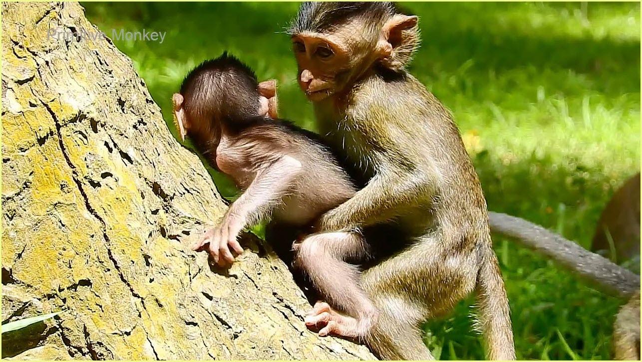 обезьяны играют