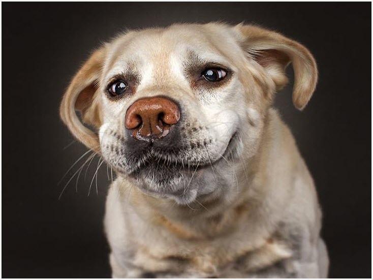 забавная собака