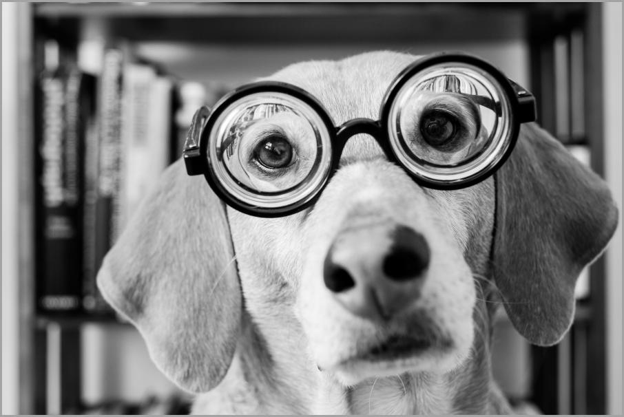 собака в очках 2