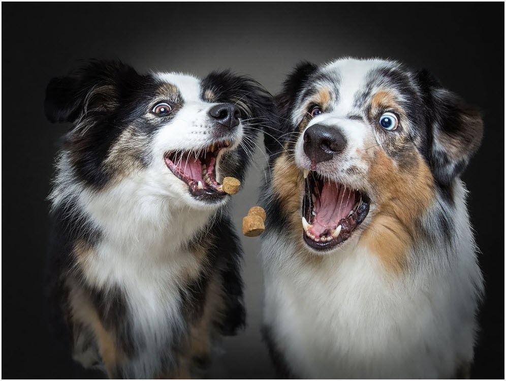 удивлённые собаки