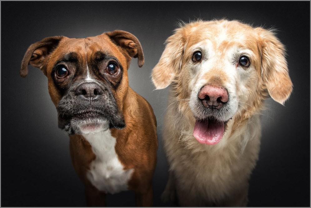 удивлённые собаки 2