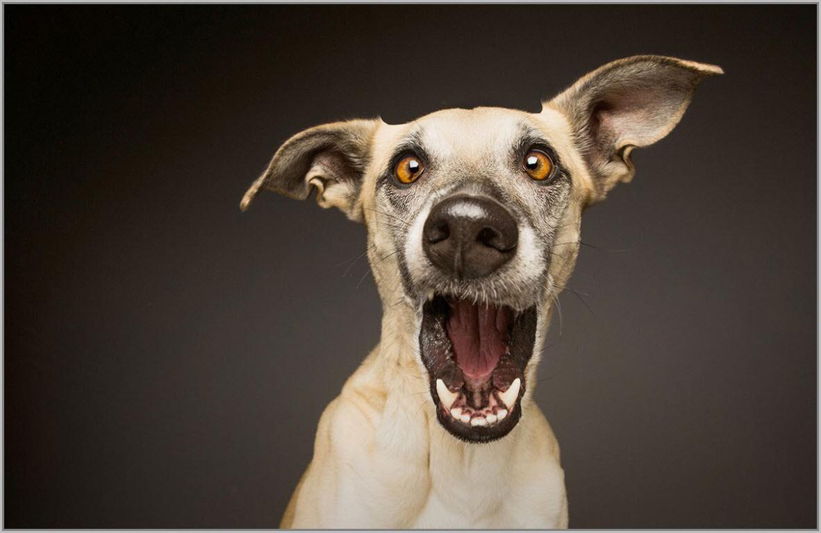 собака рот открыла