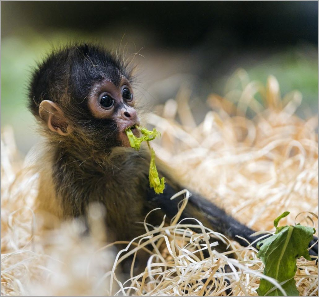 милая обезьяна