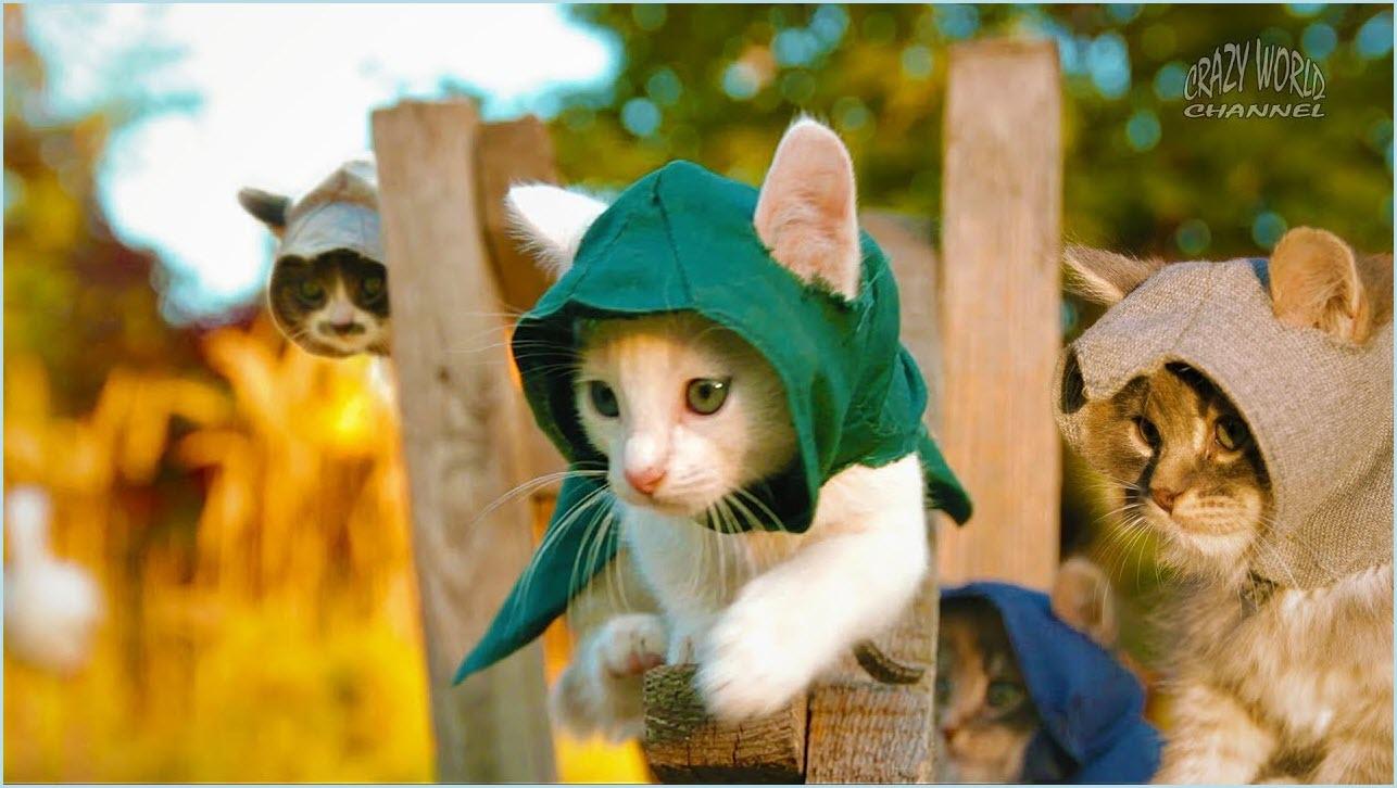 коты в шапочках