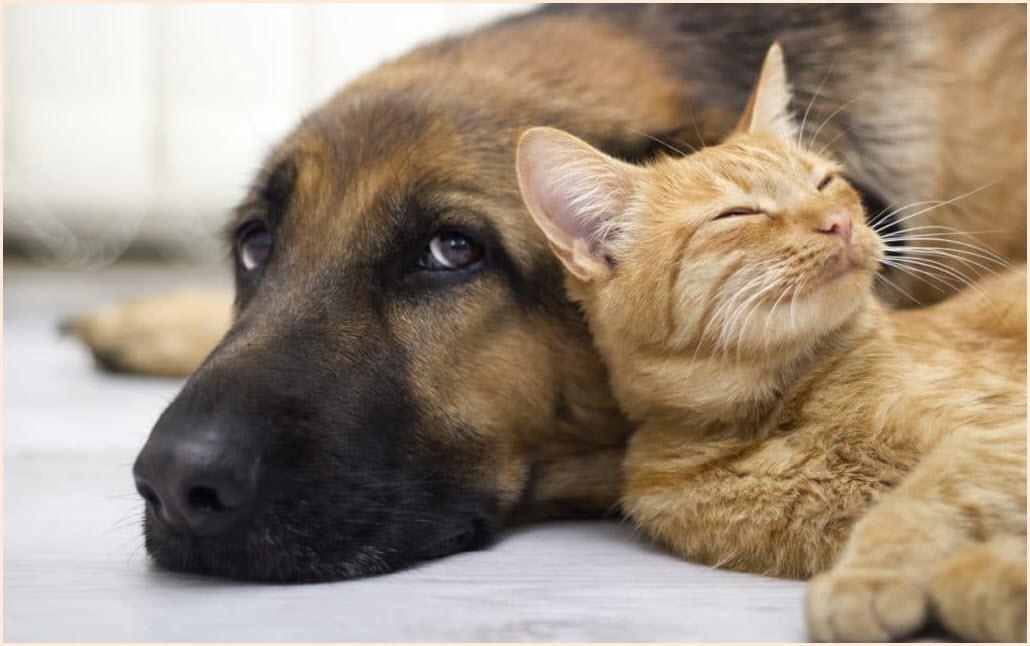 кот и пёс картинка