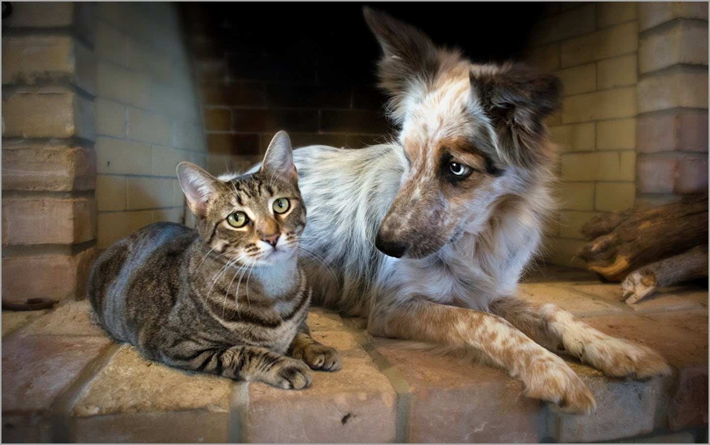 кот и пёс 5