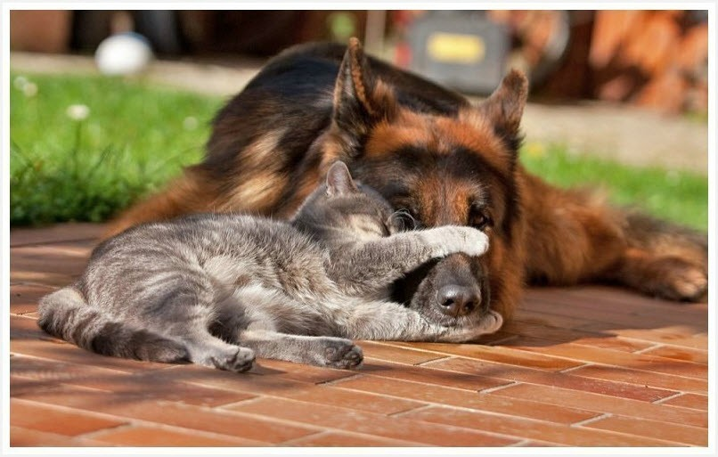 кот и пёс 6