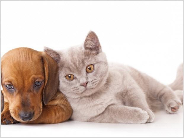 кот и пёс 8