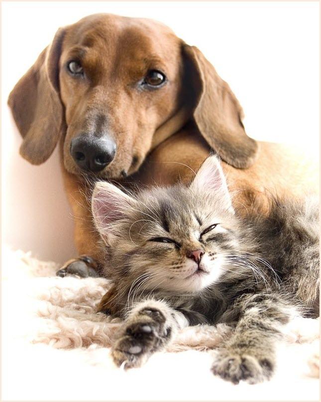 кот и пёс фото
