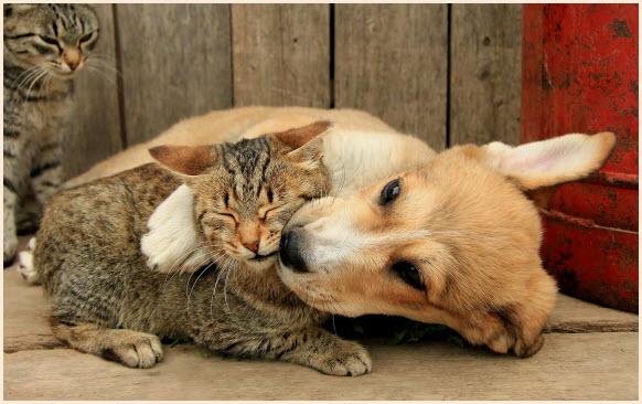кот и пёс 3