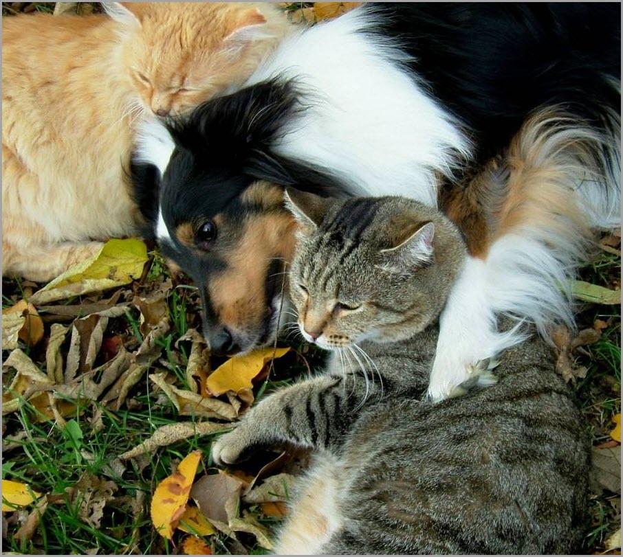собака среди кошек 2