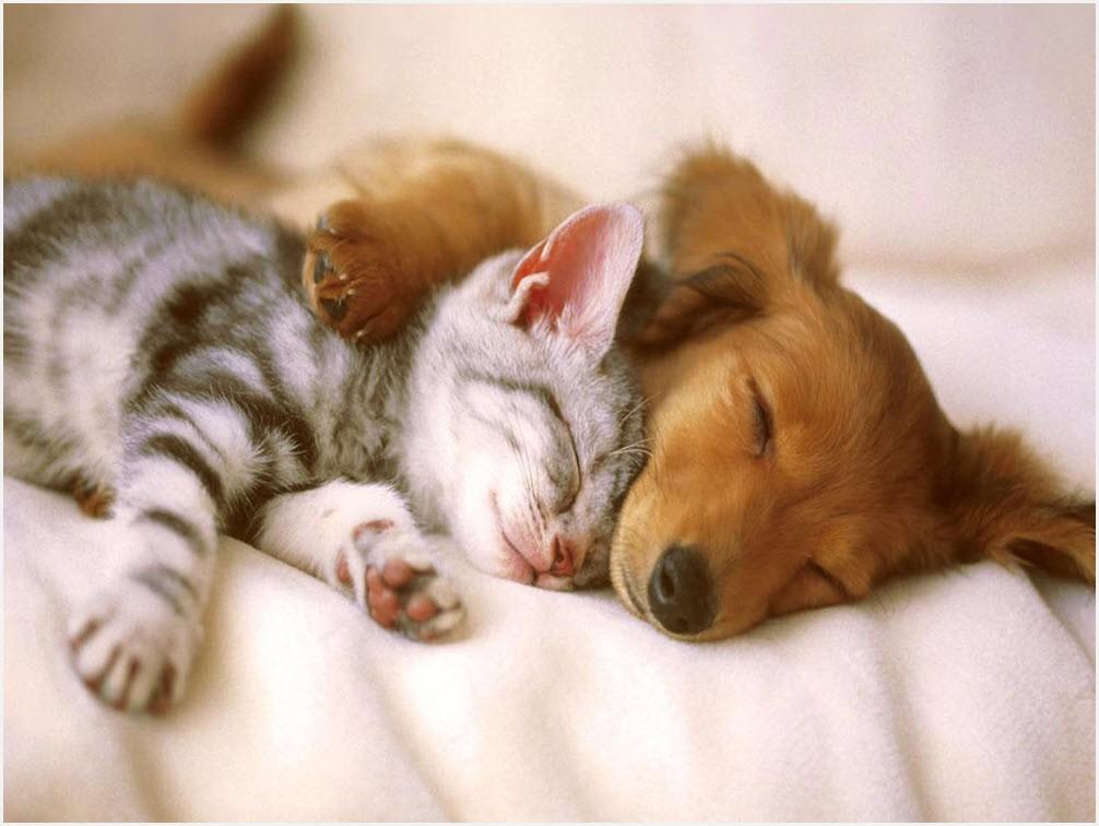 кот и пёс 7