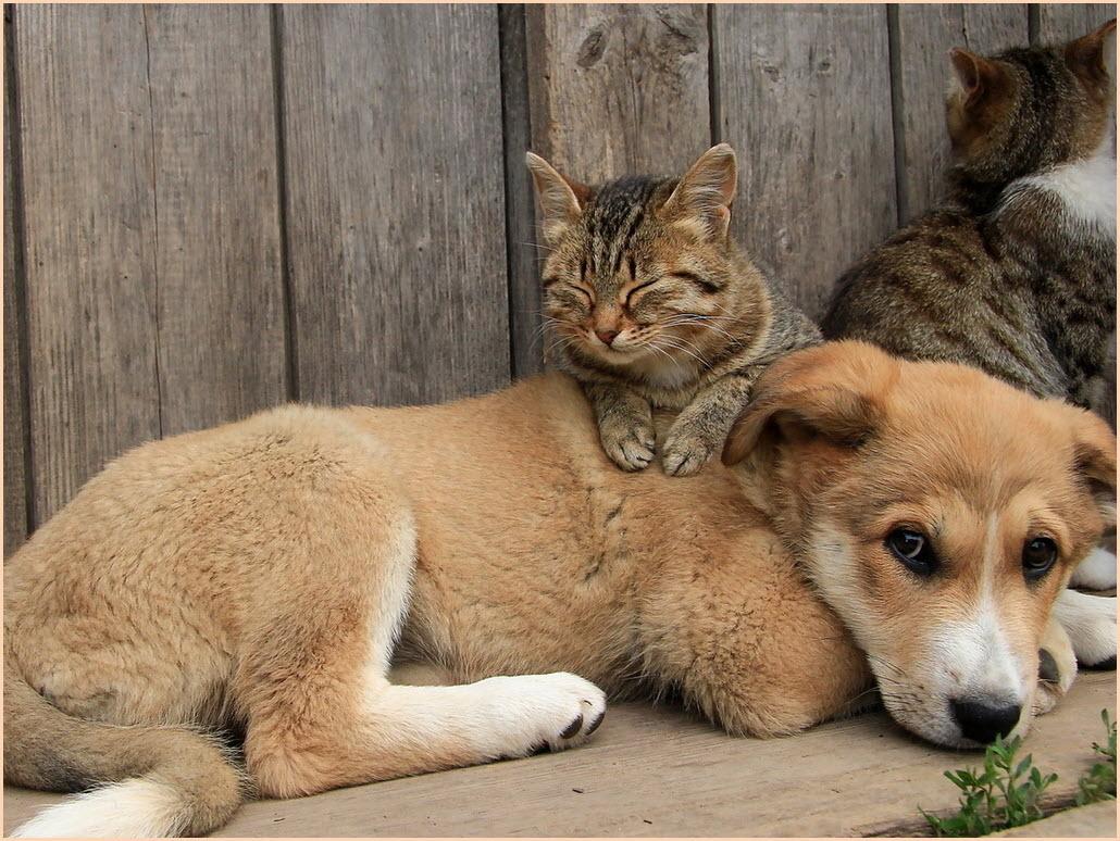 собака среди кошек