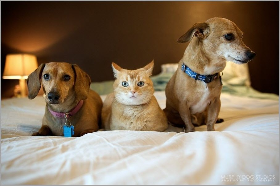 фото собачек и кошек