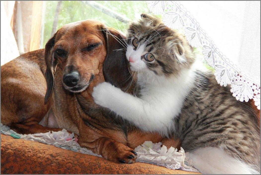 кот и собака обнимаются