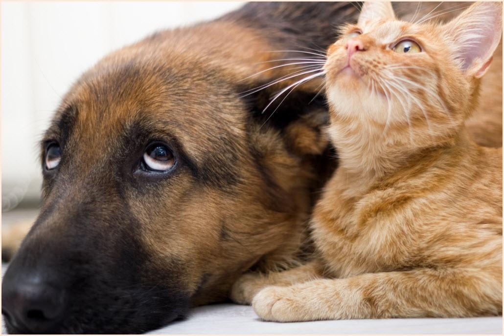 смешные кот и собака