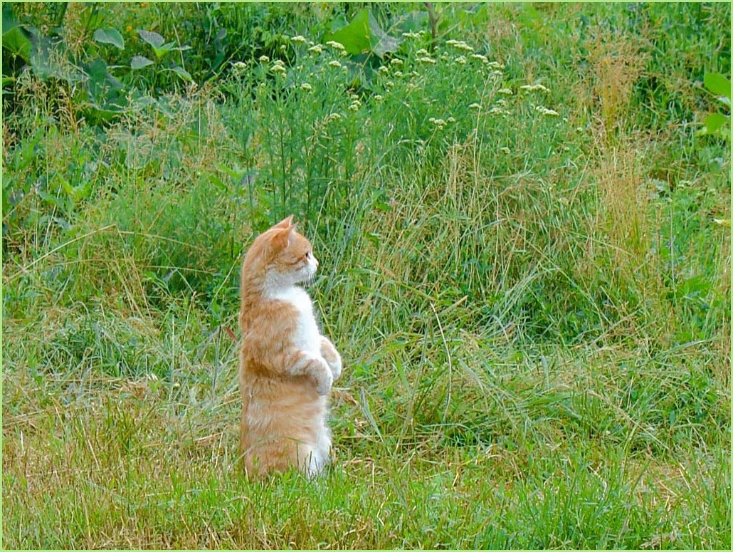 Кот в стойке