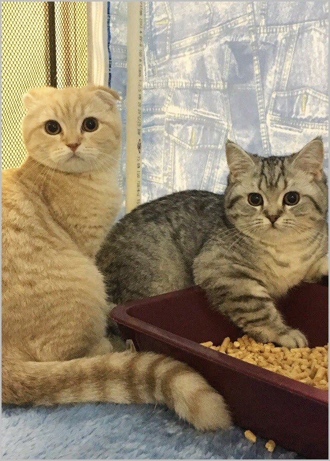 удивлённые коты