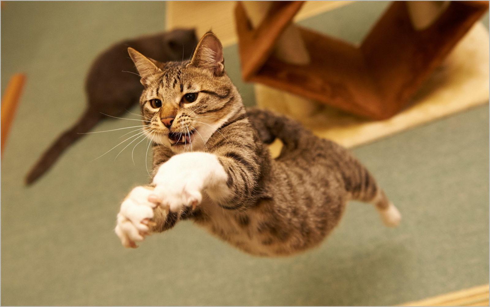 кот в прыжке