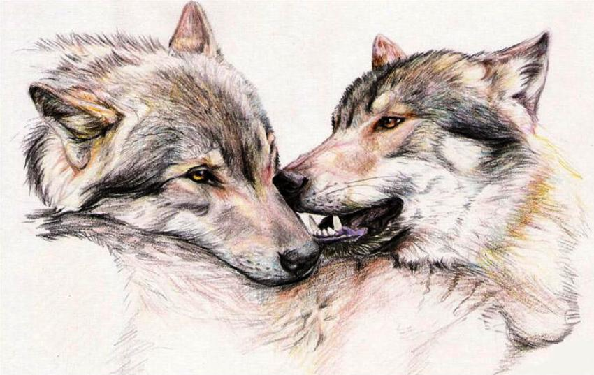 аниме волки 3