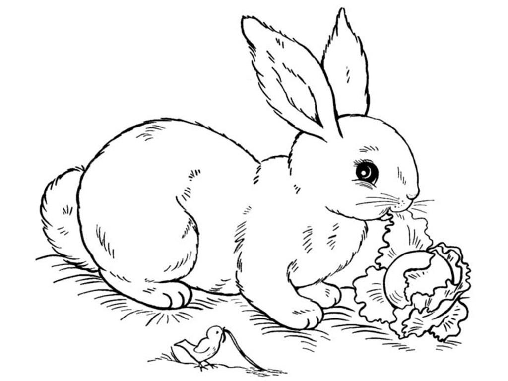 Раскраска зайчик