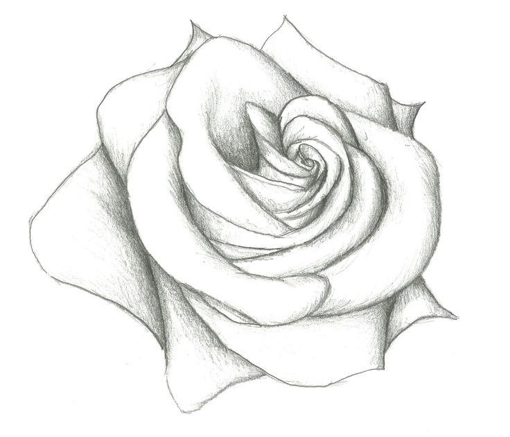 лёгкий рисунок роза