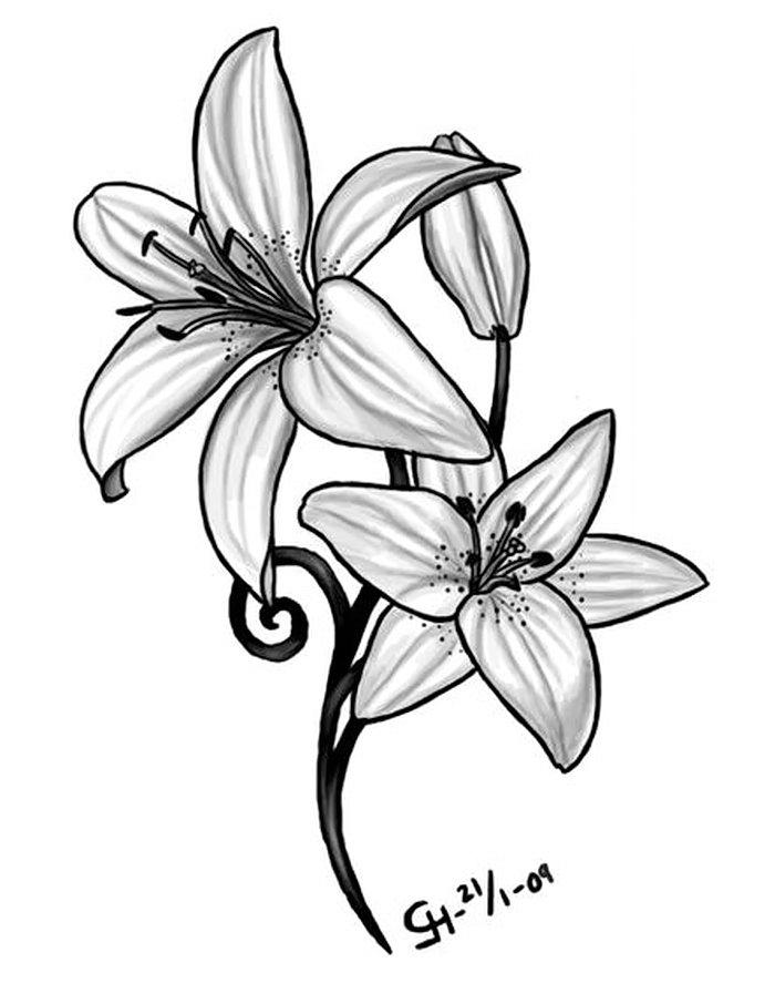 Рисунок лилия 4