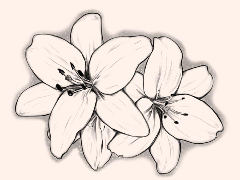 рисунок орхидея