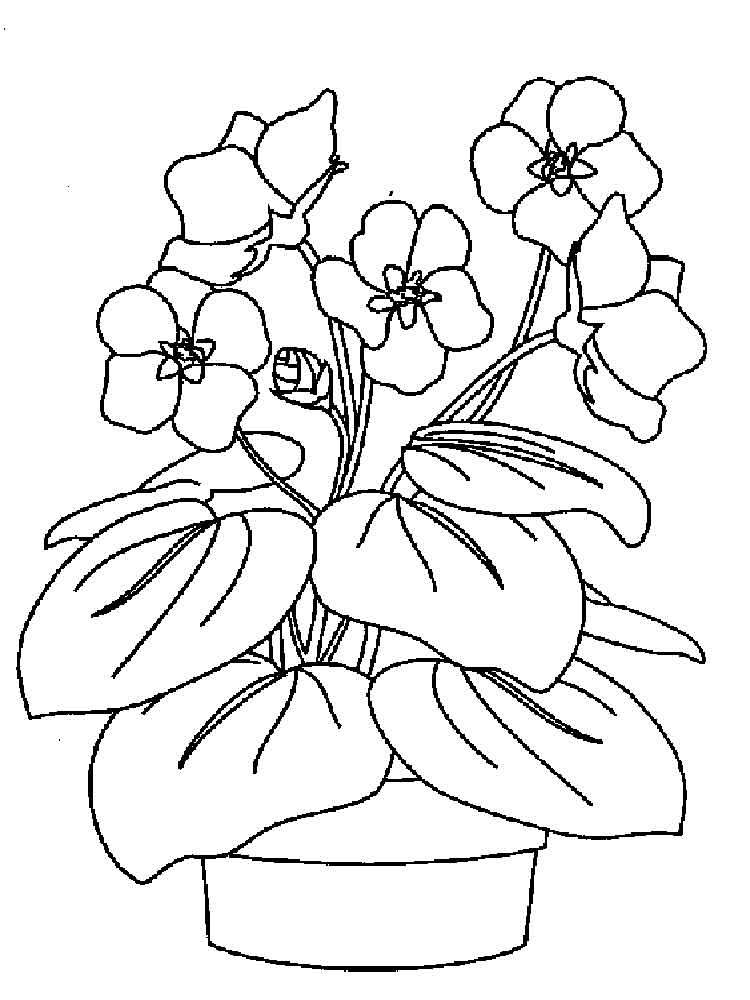 рисунок фиалки
