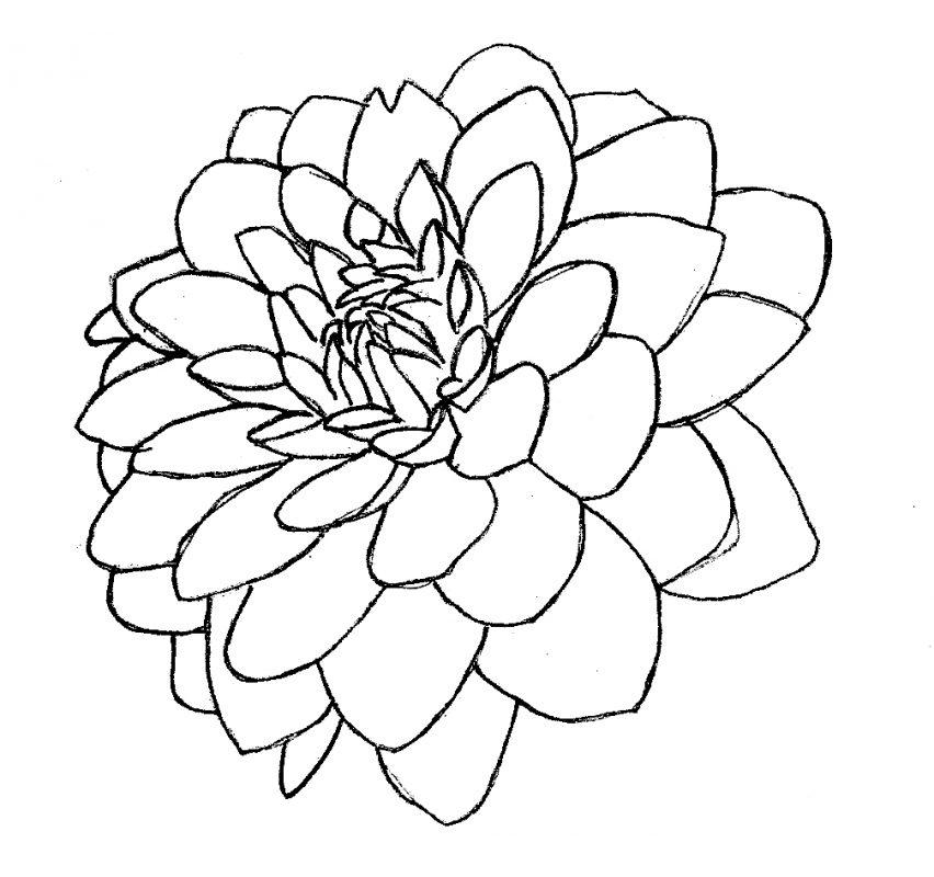 рисунок георгины 2