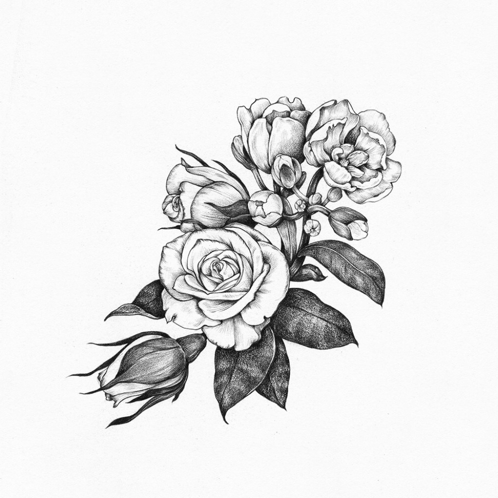рисунок розы 4