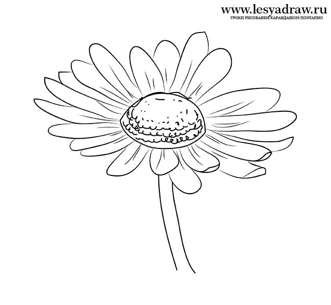 Картинка ромашка