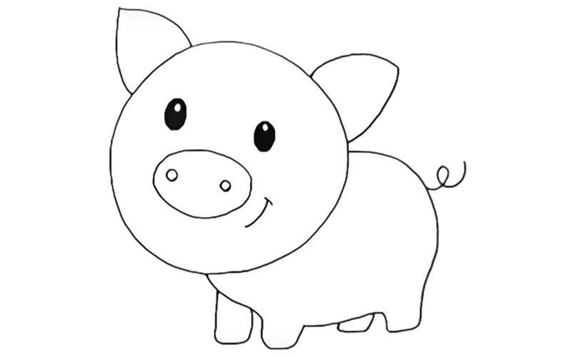 свинка рисунок