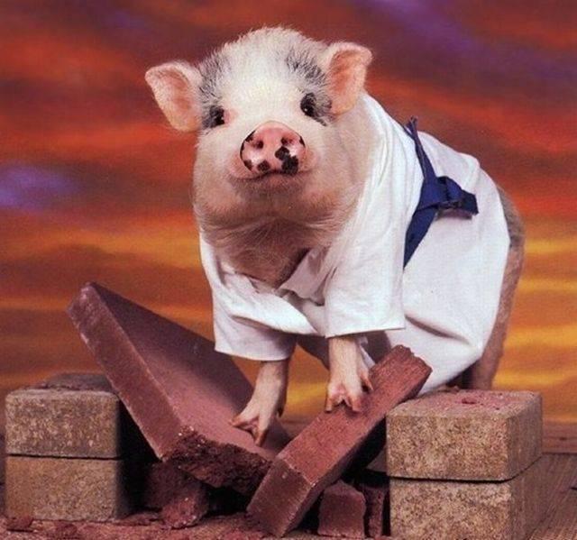 Свинка в кимоно