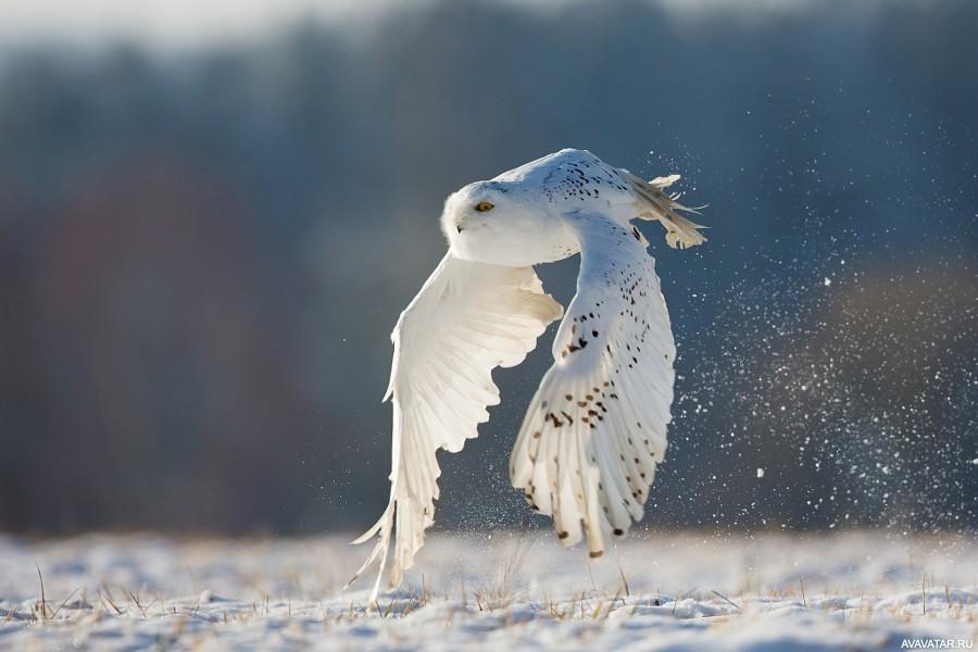 Зимние картинки | andrey-eltsov.ru