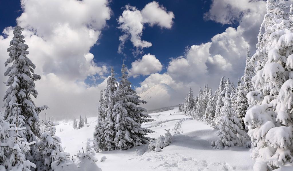 сказочный зимний лес 4