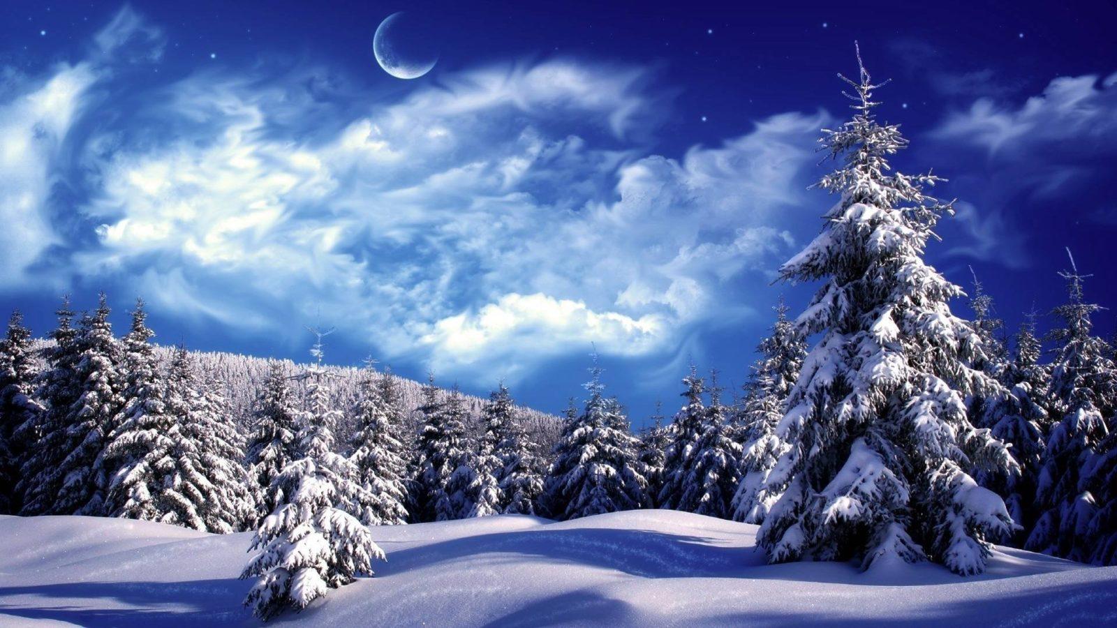 зимний лес 4