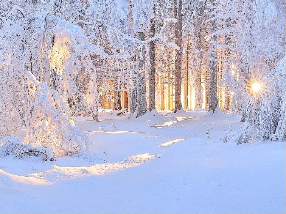заснеженный лес 3