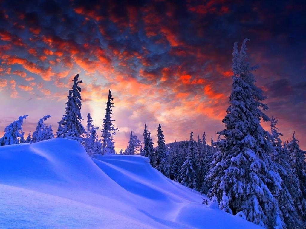 Зимний таинственный лес