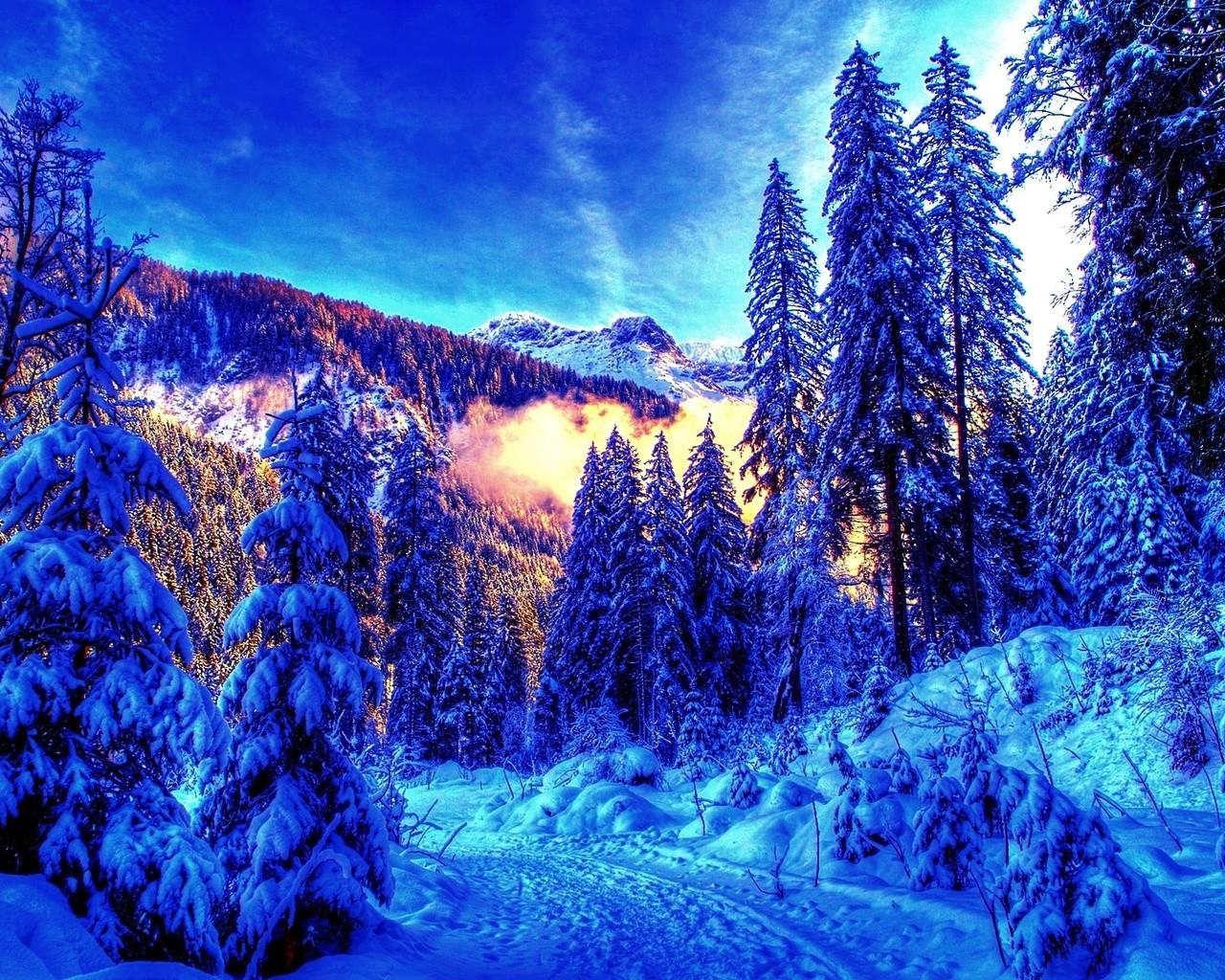 зимний лес 8