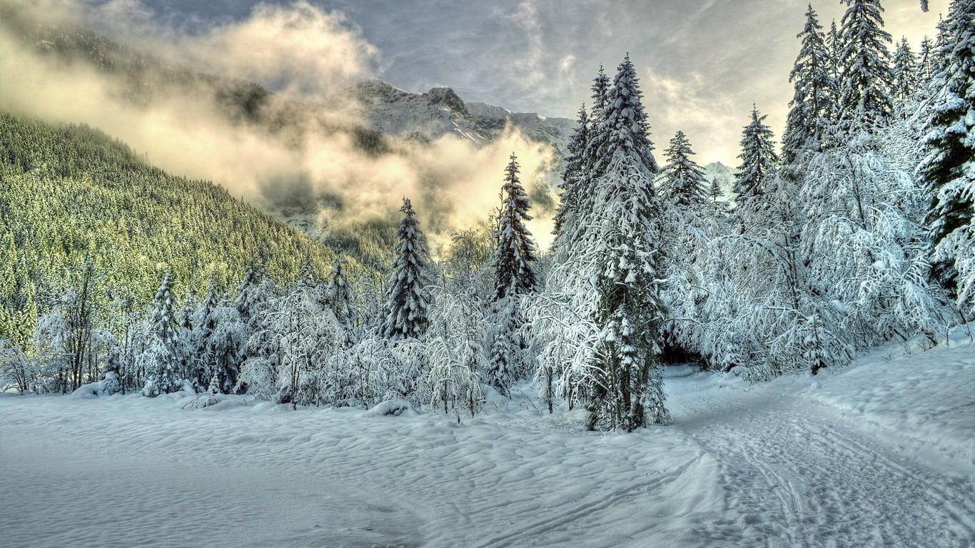 зимний лес 10