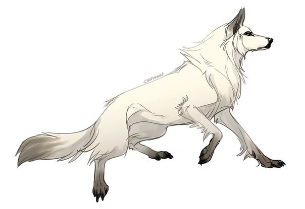 аниме волк 7