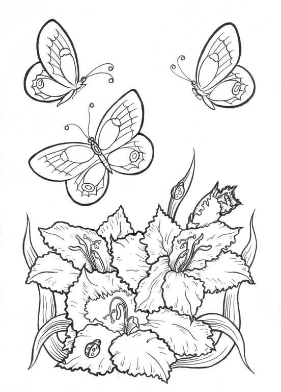 раскраска цветы и бабочки