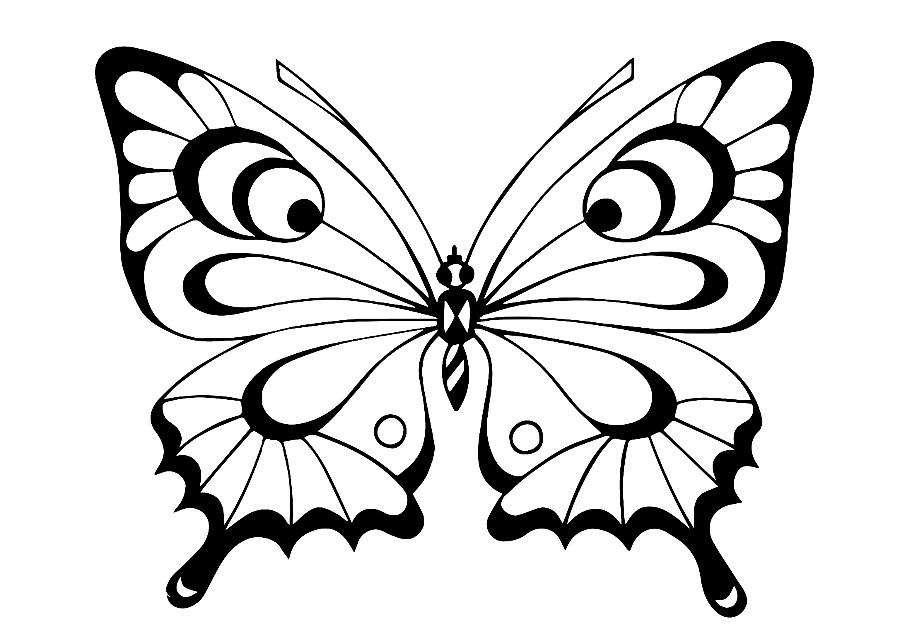 бабочка раскраска 5